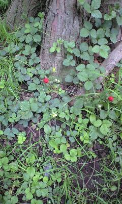 こんな植物たちのひそやかな生き方